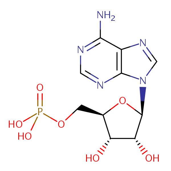 Adenosine Monophosphate structural formula